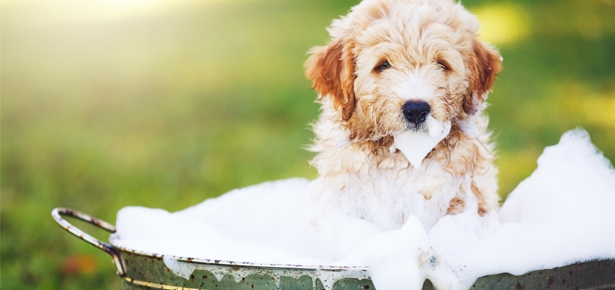Dog Grooming Requirments In Texas